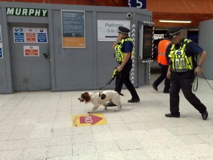 btp-with-dog